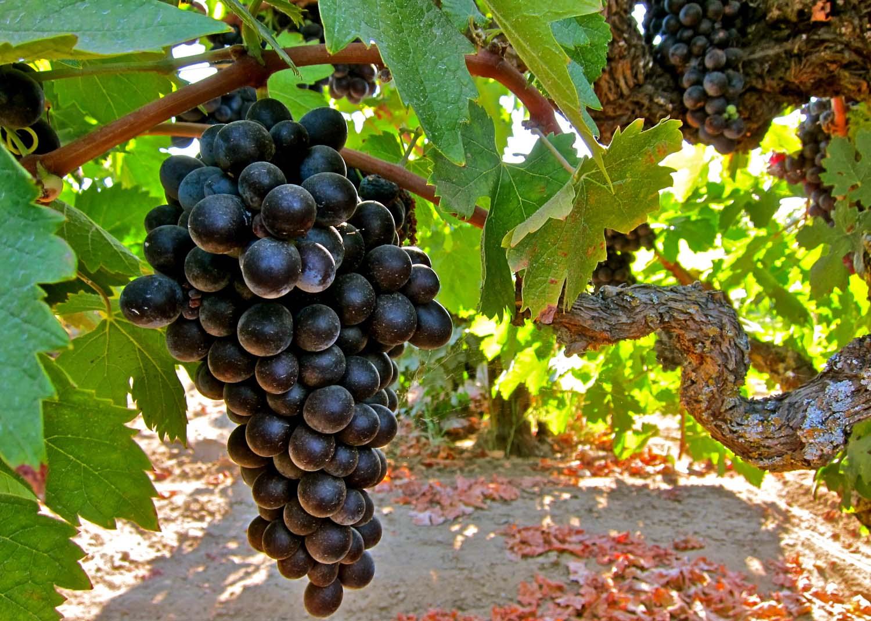 wine_history_2