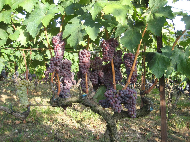 wine_history_6