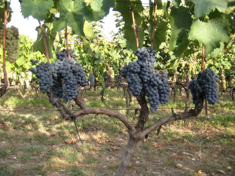 wine_history_7